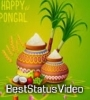Happy Pongal Status Video Download