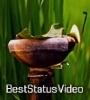 Kati Bihu Festival Status Video Download