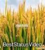 Nuakhai Juhar Whatsapp Status Video Free Download