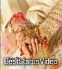 Tu Jane Na Tu Chahat Meri Kitni Betab Hai Romantic Status Video Download