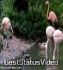 Beauty Of Nature Wildlife Flowers Birds Natural Environment Status Video Download