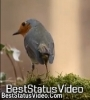 Tujh Mein Rab Dikhta Hai Nature Status Video Download