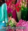 Happy Propose Day Whatsapp Status Video Female Version
