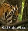 Gujar Jate Hai Mere Motivation Whatsapp Status Video Download