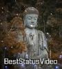 Buddha Aale Janmas Whatsapp Status Video Download