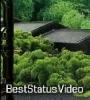 Tere Pehlu Mein Reh Lu Green Nature Video Short Download