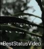 Rain Day Status Video For Whatsapp