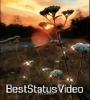 Tu Hi Meri Shab Hai Aesthetic Instagram Reels Status Video Download
