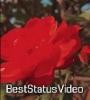 Teri Nazron Mein Hai Tere Sapne (Slowed + Reverb) Lofi Remix Status Video Download