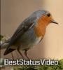 Bada Hua To Kabir Das Jayanti Whatsapp Status Video Download