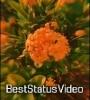 Tere Bin Sase Lu To Jee Na Saku Arijit Singh Love Song Status Video Download