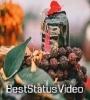 Devo Ke Dev Mahadev Ringtone Shivling Status Video Download