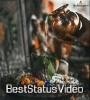 Tere Aashiq Tere Diwane Mahadev Bhakt Best Status Download