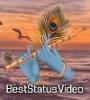 Mahi Mera Kithe Happy Janmashtami Whatsapp Status Video Download