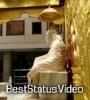 Mere Sai Baba Whatsapp Status Video Free Download