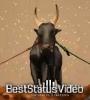 Jiva Shivachi Bail Joda Status Video Download