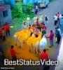 Bail Pola Song Status Sharechat