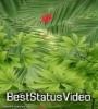 Navratri 2021 Status Video Download Hindi