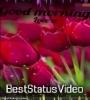 Good Morning Tik Tok Video Download Market