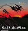Good Morning Tik Tok Video Status Download