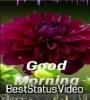 Good Morning Tik Tok Video Free Download