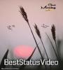 Good Morning Tik Tok Video Song