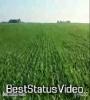 Is Gaon Ki Anpadh Mitti Pad Nhi Skti Teri Chiti WhatsApp Status Video
